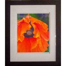 Orange Poppy 13x16